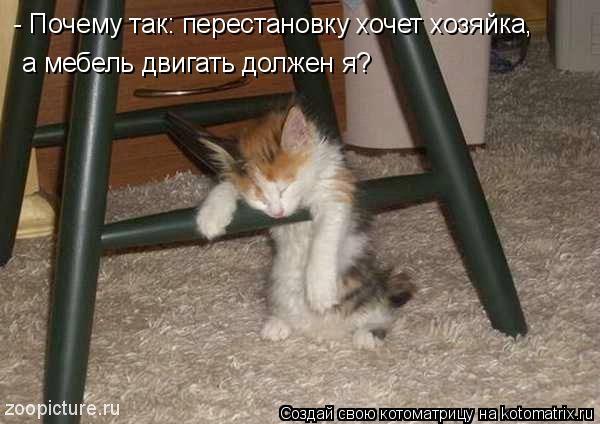 Котоматрица: - Почему так: перестановку хочет хозяйка, а мебель двигать должен я?