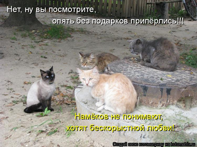 Котоматрица: Нет, ну вы посмотрите,  опять без подарков припёрлись!!! Намёков не понимают, хотят бескорыстной любви!