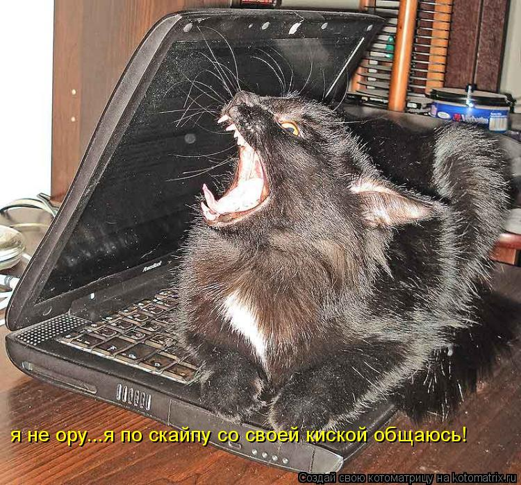 Котоматрица: я не ору...я по скайпу со своей киской общаюсь!