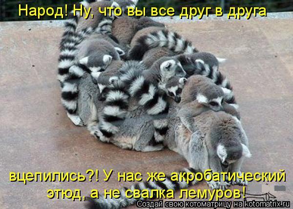 Котоматрица: Народ! Ну, что вы все друг в друга  вцепились?! У нас же акробатический этюд, а не свалка лемуров!