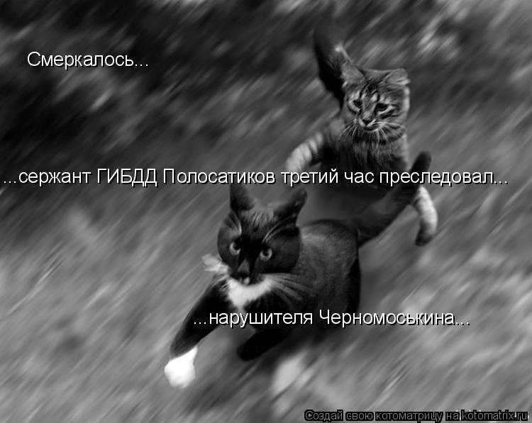 Котоматрица: ...нарушителя Черномоськина... Смеркалось... ...сержант ГИБДД Полосатиков третий час преследовал...
