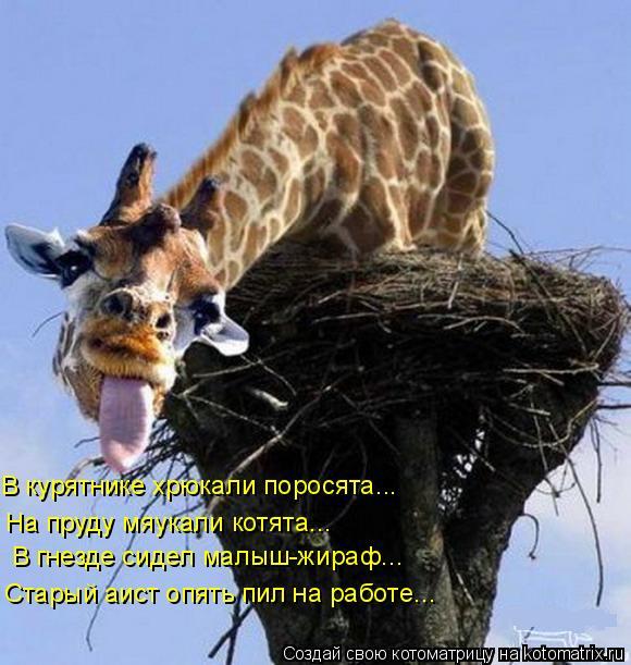 Котоматрица: На пруду мяукали котята... В гнезде сидел малыш-жираф... Старый аист опять пил на работе... В курятнике хрюкали поросята...
