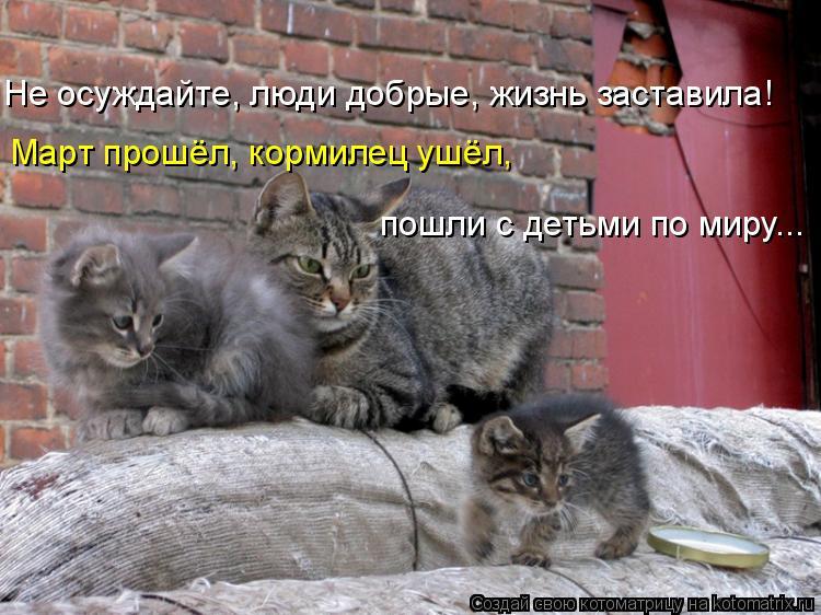 Котоматрица: Не осуждайте, люди добрые, жизнь заставила! Март прошёл, кормилец ушёл,  пошли с детьми по миру...