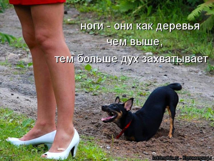 Котоматрица: ноги - они как деревья чем выше,  тем больше дух захватывает