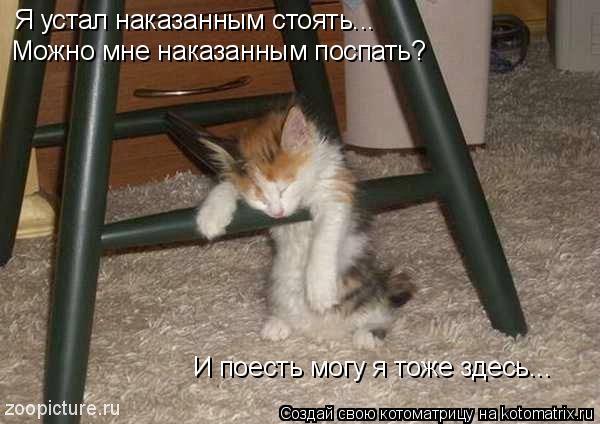 Котоматрица: Я устал наказанным стоять... Можно мне наказанным поспать? И поесть могу я тоже здесь...
