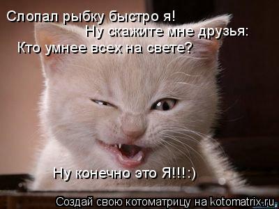 Котоматрица: Слопал рыбку быстро я! Ну скажите мне друзья: Кто умнее всех на свете? Ну конечно это Я!!!:)