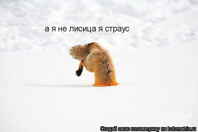 Котоматрица: а я не лисица я страус