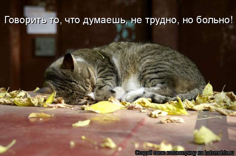 Котоматрица: Говорить то, что думаешь, не трудно, но больно!