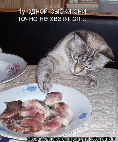 Котоматрица: Ну одной рыбки они  точно не хватятся...