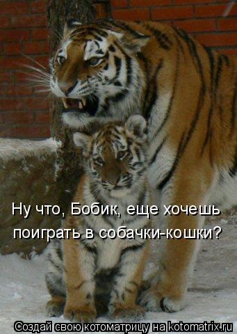 Котоматрица: Ну что, Бобик, еще хочешь  поиграть в собачки-кошки?