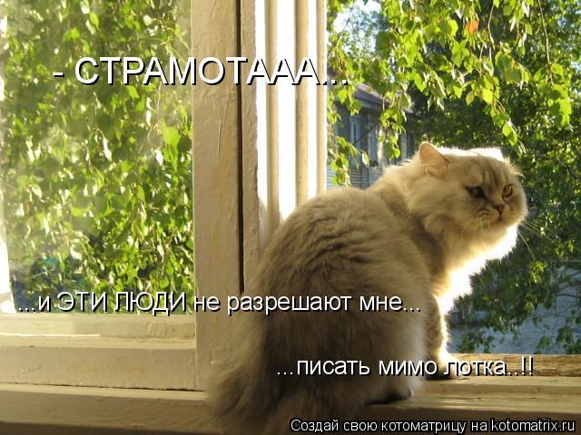 Котоматрица: - СТРАМОТААА... ...и ЭТИ ЛЮДИ не разрешают мне... ...писать мимо лотка..!!