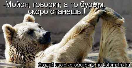 Котоматрица: -Мойся, говорит, а то бурым скоро станешь!!
