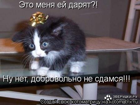 Котоматрица: Это меня ей дарят?!  Ну нет, добровольно не сдамся!!!