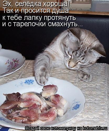 Котоматрица: Эх, селёдка хороша! Так и просится душа к тебе лапку протянуть и с тарелочки смахнуть...