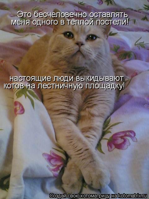 Котоматрица: Это бесчеловечно оставлять  меня одного в теплой постели! настоящие люди выкидывают котов на лестничную площадку!