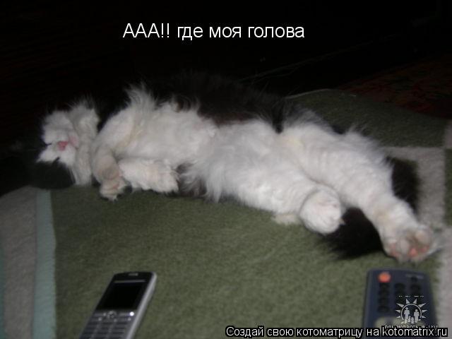 Котоматрица: ААА!! где моя голова