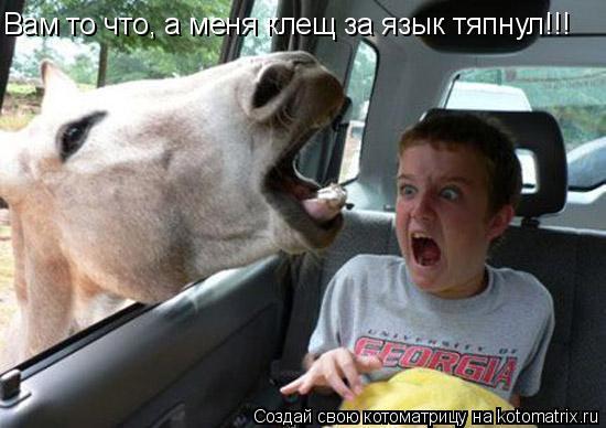 Котоматрица: Вам то что, а меня клещ за язык тяпнул!!!