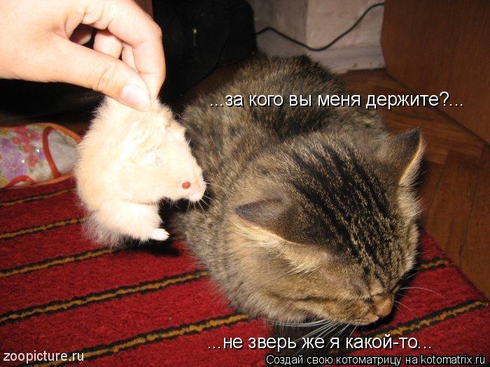 Котоматрица: ...за кого вы меня держите?... ...не зверь же я какой-то...
