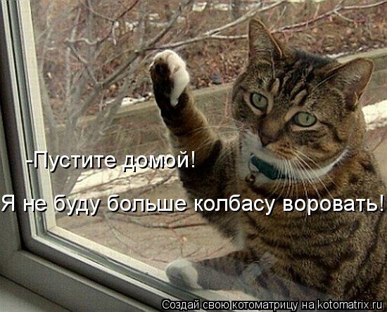 Котоматрица: Я не буду больше колбасу воровать!!!!! -Пустите домой!