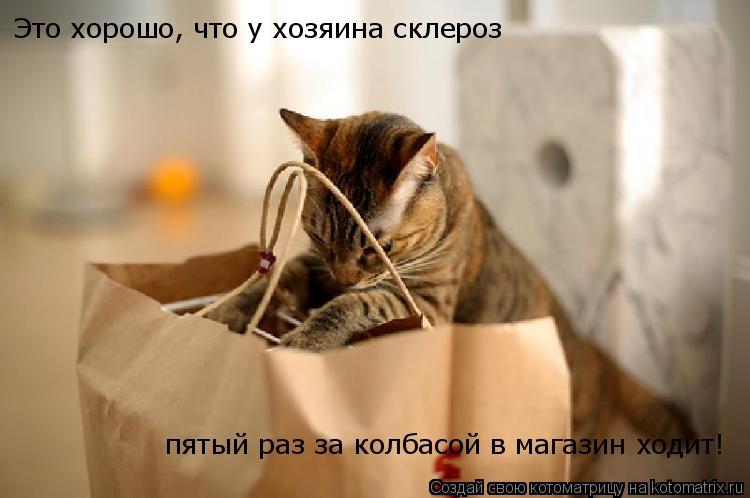 Котоматрица: Это хорошо, что у хозяина склероз пятый раз за колбасой в магазин ходит!
