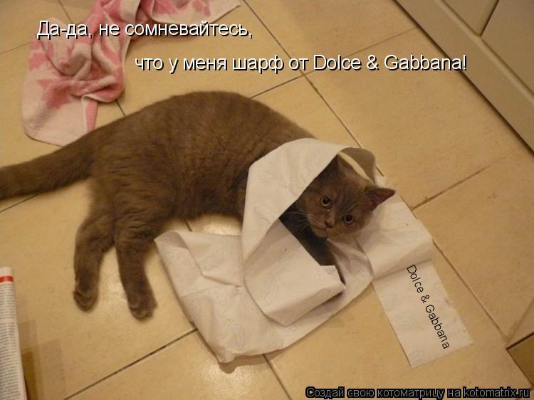 Котоматрица: Dolce & Gabbana Да-да, не сомневайтесь, что у меня шарф от Dolce & Gabbana!