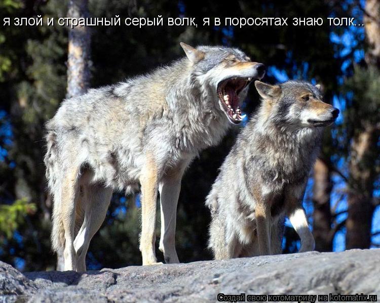 переписку вопросам с голодной волчицей выходит на дорогу врио губернатора
