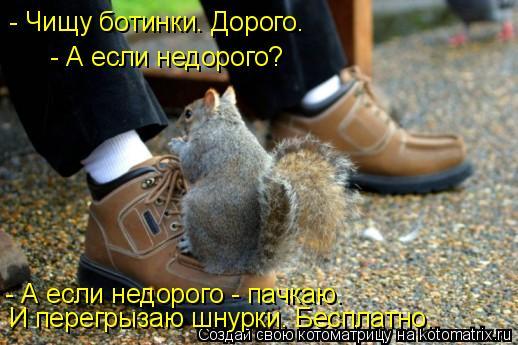 Котоматрица: - Чищу ботинки. Дорого. - А если недорого? - А если недорого - пачкаю. И перегрызаю шнурки. Бесплатно.