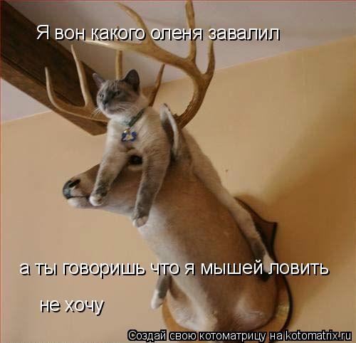 Котоматрица: Я вон какого оленя завалил а ты говоришь что я мышей ловить не хочу