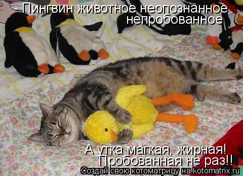 Котоматрица: - Пингвин животное неопознанное непробованное А утка магкая, жирная! Пробованная не раз!!