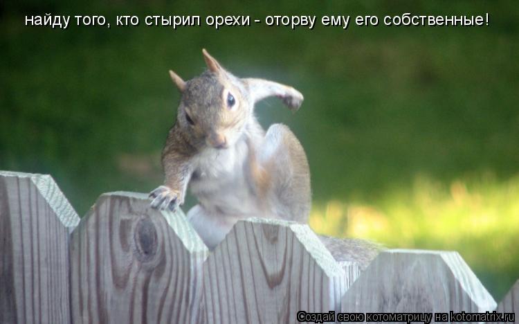 Котоматрица: найду того, кто стырил орехи - оторву ему его собственные!