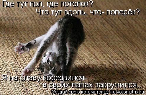 Котоматрица: Где тут пол, где потолок? Что тут вдоль, что- поперёк? Я на славу порезвился- в своих лапах закружился...
