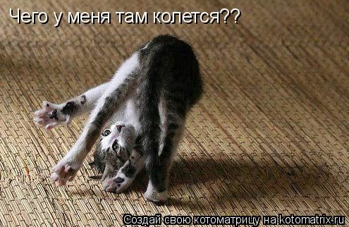 Котоматрица: Чего у меня там колется??