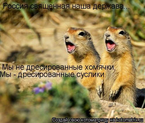 Котоматрица: Россия священная наша держава... Мы не дресированные хомячки, Мы - дресированные суслики