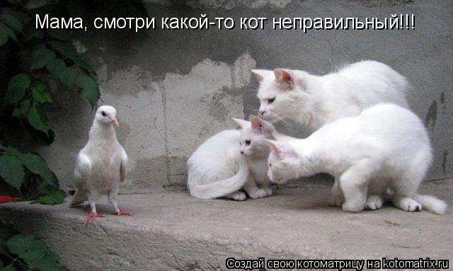 Котоматрица: Мама, смотри какой-то кот неправильный!!!