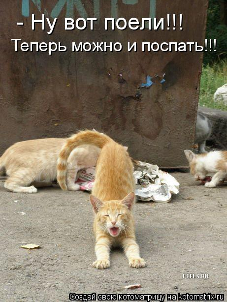 Котоматрица: - Ну вот поели!!! Теперь можно и поспать!!!