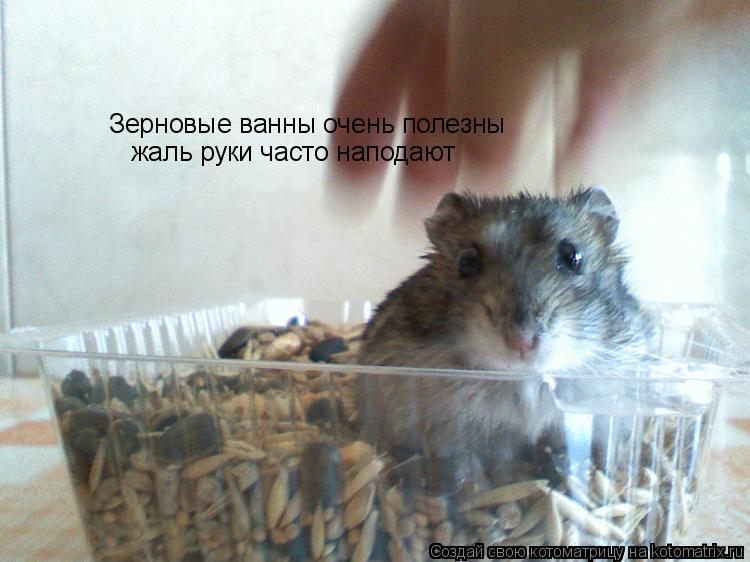 Котоматрица: Зерновые ванны очень полезны жаль руки часто наподают