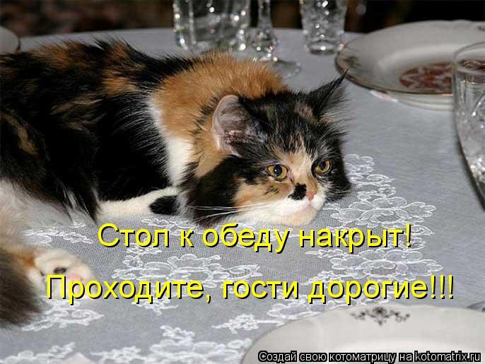 Котоматрица: Стол к обеду накрыт! Проходите, гости дорогие!!!