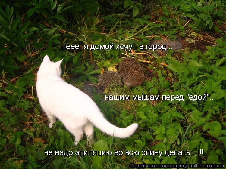 """Котоматрица: - Неее, я домой хочу - в город... ...нашим мышам перед """"едой""""... ...не надо эпиляцию во всю спину делать...!!!"""