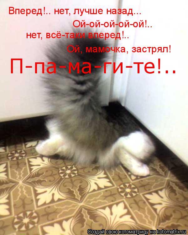 Котоматрица: Вперед!.. нет, лучше назад... Ой-ой-ой-ой-ой!.. нет, всё-таки вперед!.. П-па-ма-ги-те!.. Ой, мамочка, застрял!