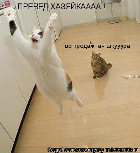 Котоматрица: ПРЕВЕД ХАЗЯЙКАААА ! во продажная шкууура