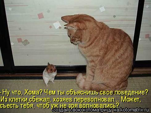 Котоматрица: - Ну что, Хома? Чем ты объяснишь свое поведение? Из клетки сбежал, хозяев переволновал... Может, съесть тебя, чтоб уж не зря волновались?