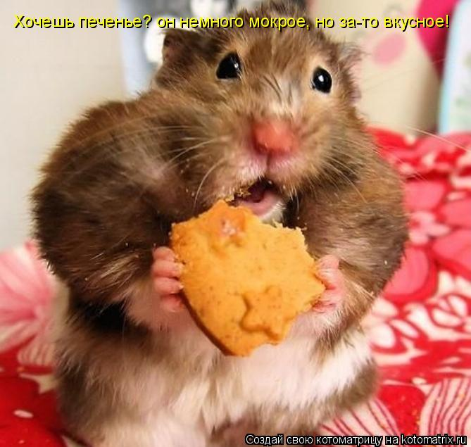 Котоматрица: Хочешь печенье? он немного мокрое, но за-то вкусное!