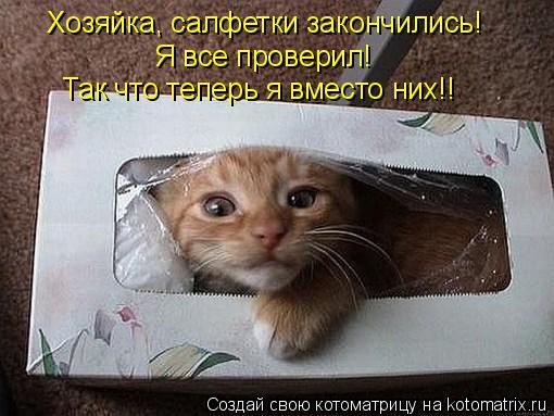 Котоматрица: Хозяйка, салфетки закончились! Я все проверил! Так что теперь я вместо них!!