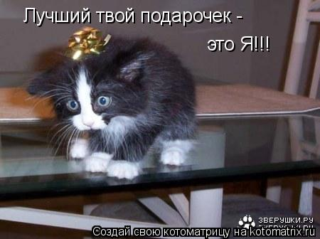 Котоматрица: Лучший твой подарочек - это Я!!!