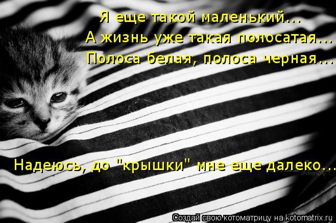 """Котоматрица: Я еще такой маленький... А жизнь уже такая полосатая... Полоса белая, полоса черная... Надеюсь, до """"крышки"""" мне еще далеко..."""