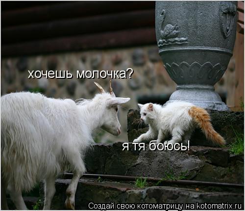 Котоматрица: хочешь молочка? я тя боюсь!