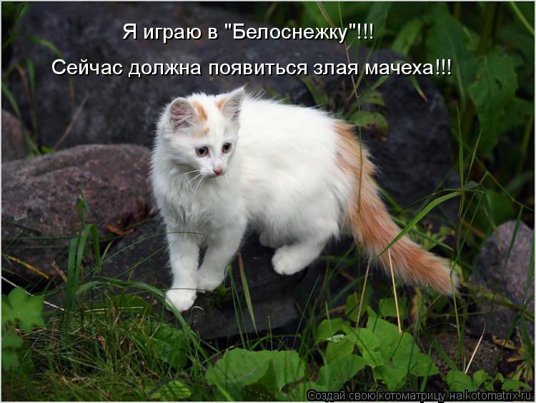 """Котоматрица: Я играю в """"Белоснежку""""!!! Сейчас должна появиться злая мачеха!!!"""