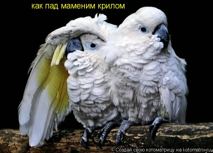Котоматрица: как пад маменим крилом
