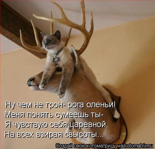 Котоматрица: Ну чем не трон- рога оленьи! Меня понять сумеешь ты- Я чувствую себя царевной, На всех взирая свысоты...