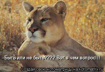 Котоматрица: -Быть или не быть???? Вот в чем вопрос!!!